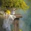 Самоклейка D-C-Fix (Дуб сан-ремо) 67,5см х 15м Df 200-8432 12