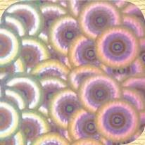Самоклейка Hongda (Цветы) 45см х 15м H1038