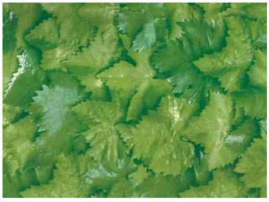 Самоклейка Hongda (Березовые листья) 90см х 15м H5495