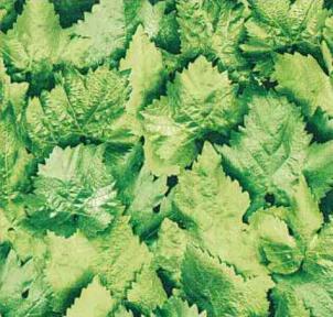 Самоклейка Gekkofix (Березовые листья) 67,5см х 15м 10765