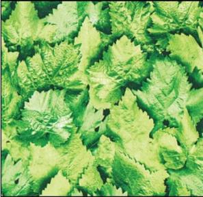 Самоклейка Gekkofix (Березовые листья) 90см х 15м 10767
