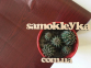 Самоклейка Patifix (Красное дерево) 67.5см х 15м 62-3005